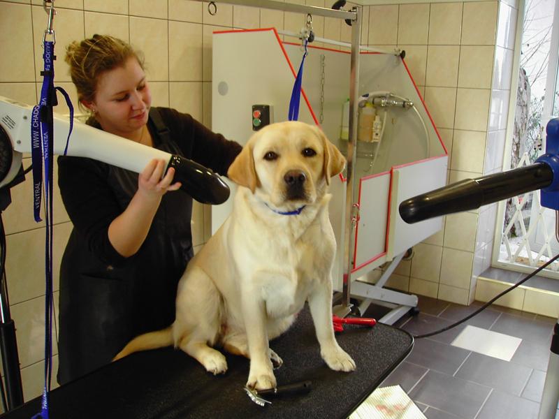 Salon de toilettage les p 39 tites canailles for Salon toilettage chien